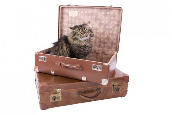 comment pr parer son bagage main pour voyager en avion. Black Bedroom Furniture Sets. Home Design Ideas